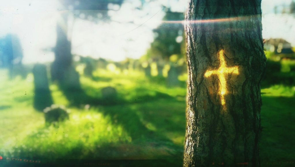 Reflection of cross on tree