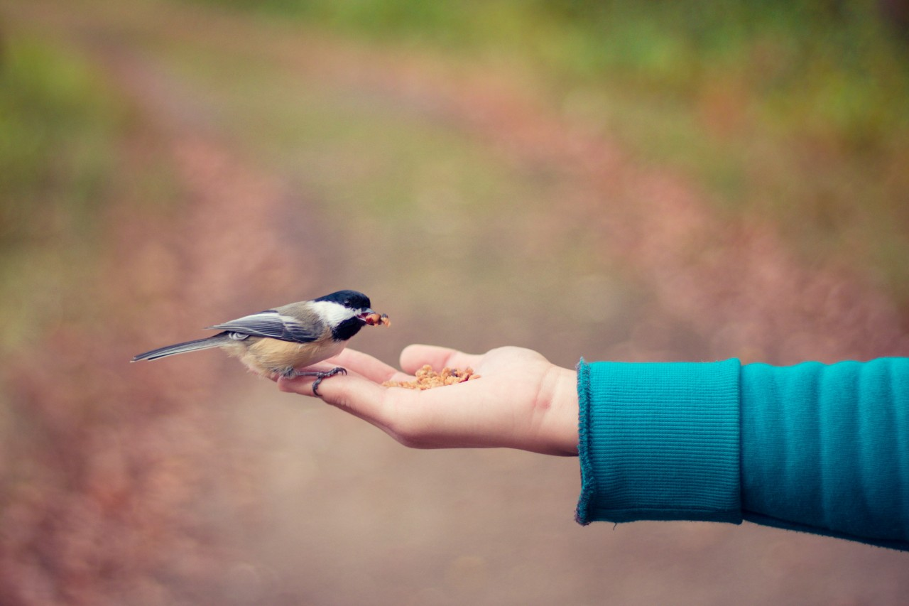 Small bird being fed from the palm
