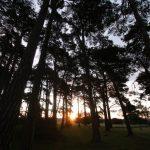 Early morning sun through trees