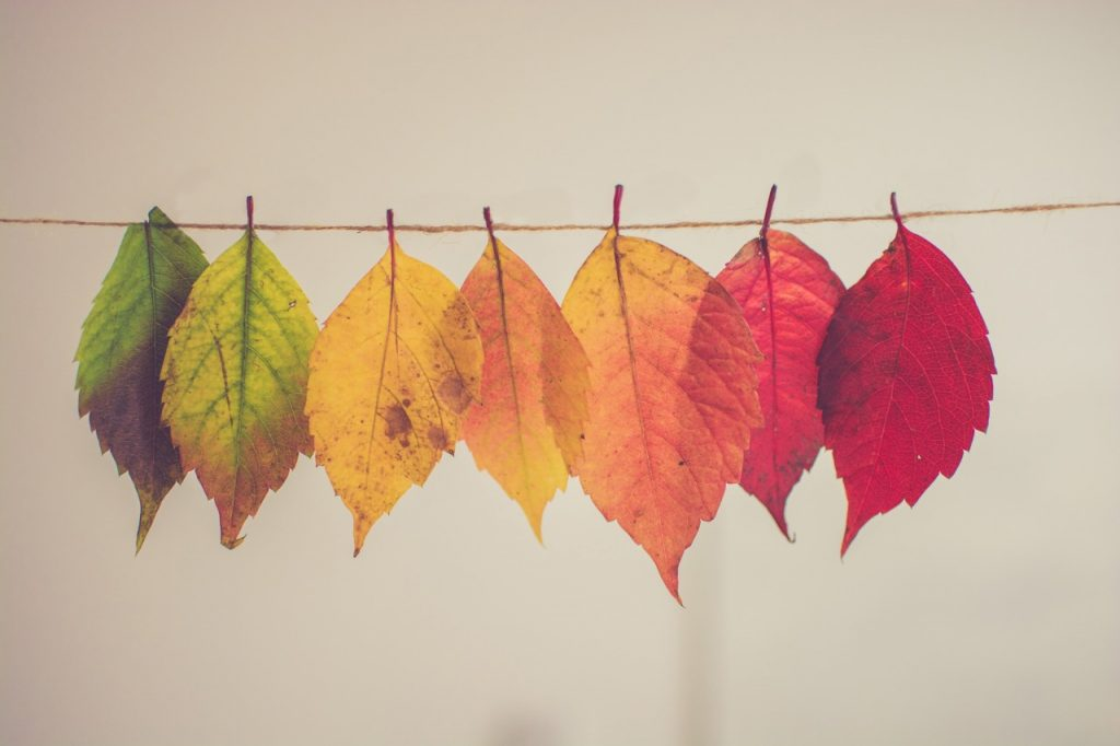 Leaves from green to red hung on a line