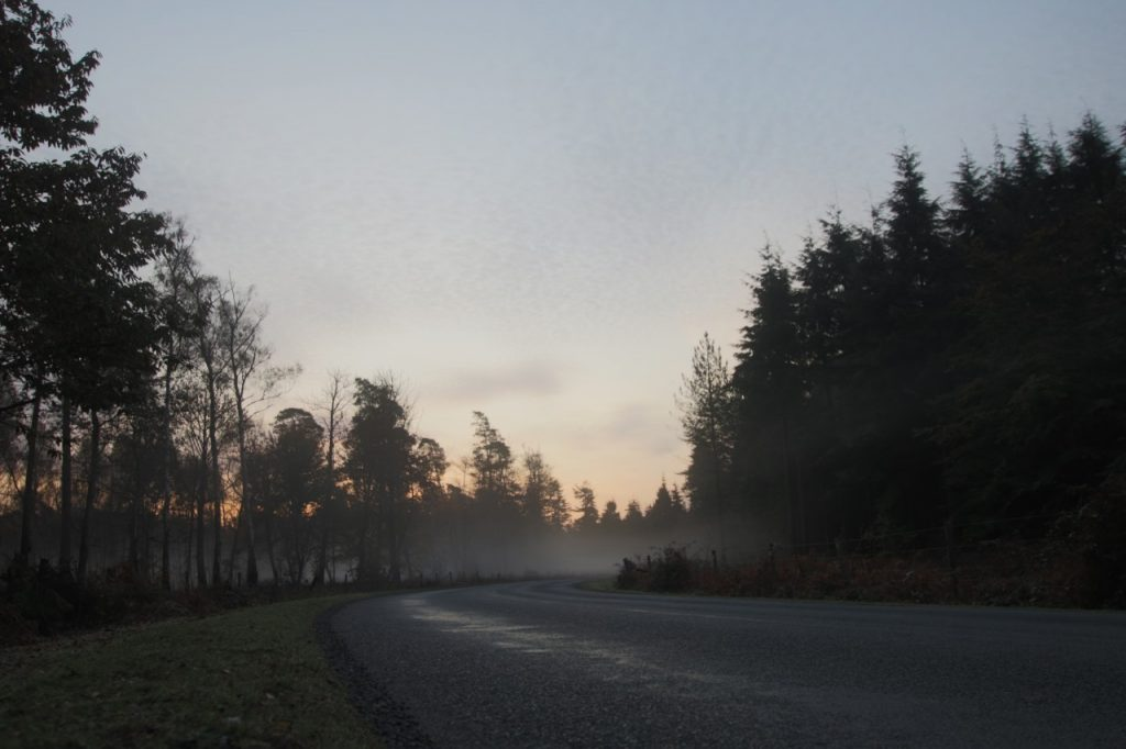 rNew Forest Road at dawn
