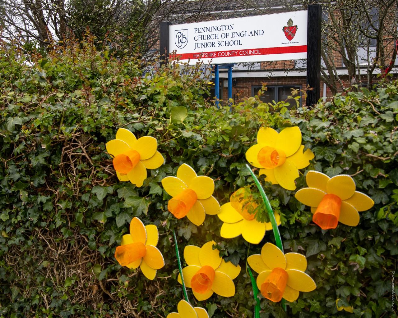 Pennington Daffodils outside Pennington Infant School