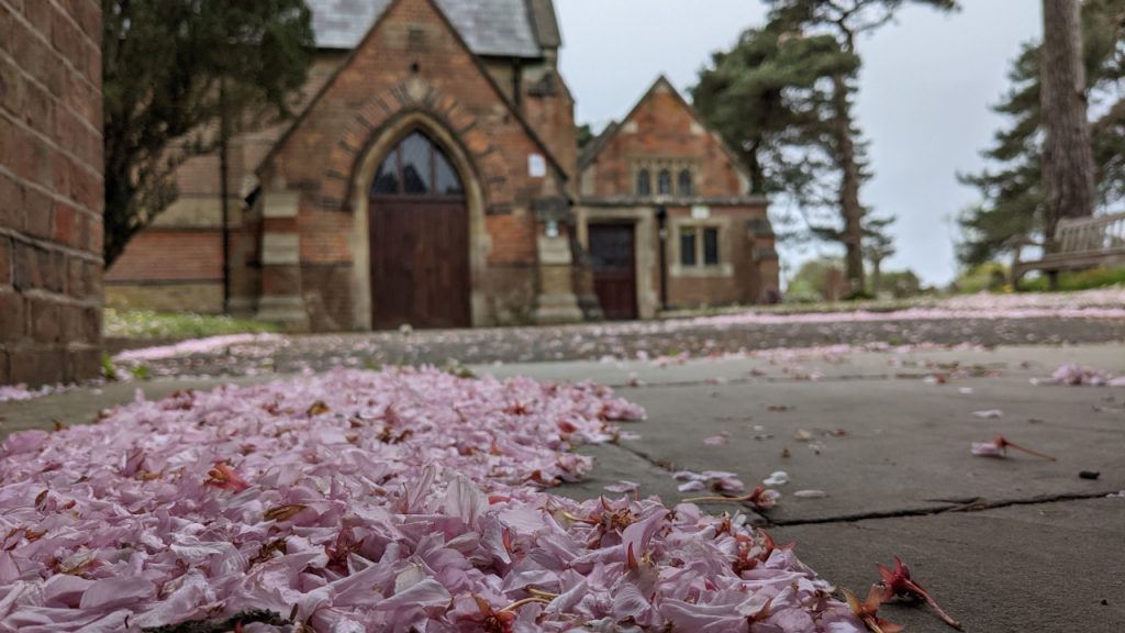 Cherry blossom on the path to the main entrance of St Marks